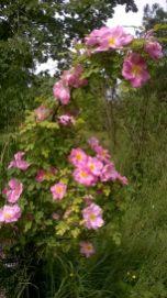 Feeringbury Manor Gardens (16)