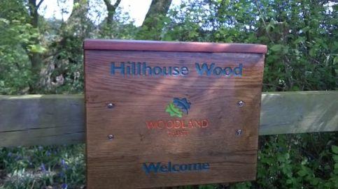 Bluebells at Hillhouse Wood West Bergholt (4)
