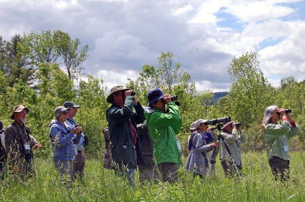 Birdwatching: Golden-winged Warbler Watchers (Photo: Pete DeMola, Valley News)