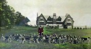 Hunting dogs painting