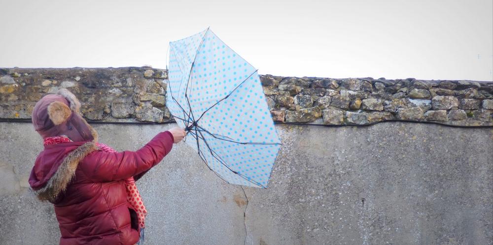 Sous la pluie il pousse de nouvelles créations