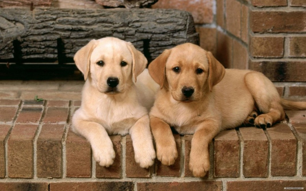 Dogs-dogs-16761952-2560-1600