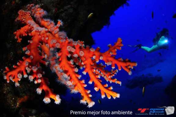 Fotusub Lanzarote Mar de Lava. Fotografía subacuática diving