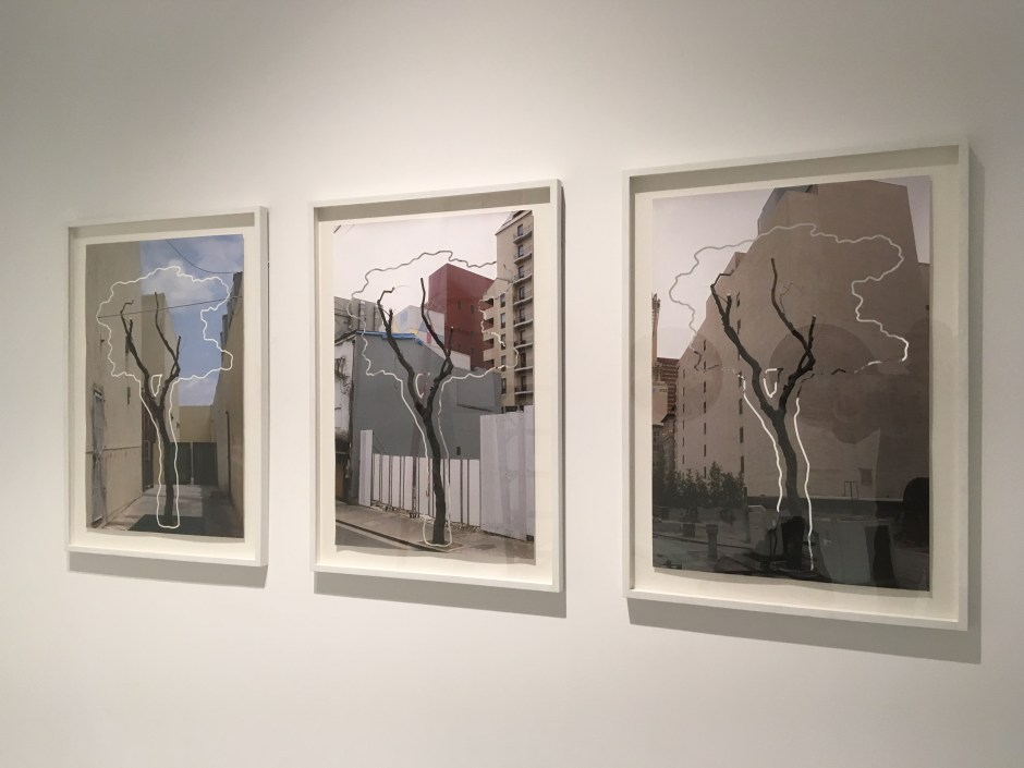 The_Tree_Series_©_Glenn_Wexler