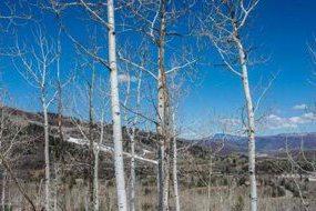 Aspen real estate 082717 143663 Tbd Powderbowl Trail 4 190H