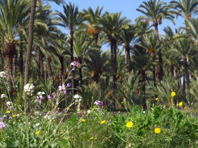 Las especies de plantas ruderales, son esenciales para el equilibrio del ecosistema (O. Aldeguer)