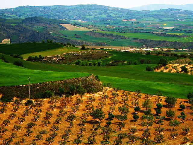 Vinhedos em Navarra. Foto: Hector García (CreativeCommons)