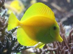 casa-conjunta-a-peixes