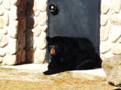Casa-conjunta-a-urso