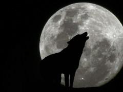 lua-conjunta-cão