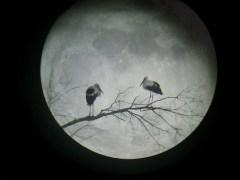 lua-conjunção-cegonha