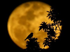 lua-conjunta-pássaros-lenormand
