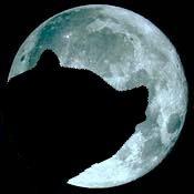 lua-conjunta-urso