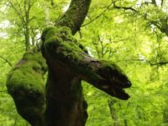 cobra-conjunta-árvore-lenormand