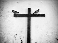 cruz-conjunção-pássaros-lenormand