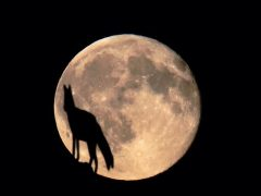 raposa-conjunção-lua-lenormand