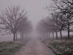 árvore-conjunção-caminho-lenormand