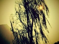 árvore-conjunção-chicote-lenormand