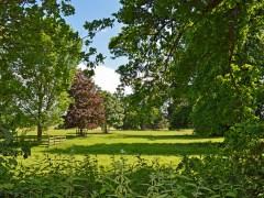 árvore-conjunção-jardim