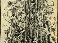 árvore-conjunção-livro-lenormand