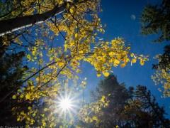 árvore-conjunção-sol-lenormand