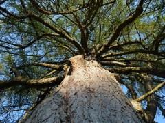 árvore-conjunção-torre-baralho-cigano
