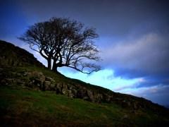 morro-conjunção-árvore-lenormand