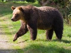 urso-conjunção-cavaleiro-lenormand