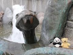 urso-conjunção-cobra-lenormand