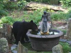 urso-conjunção-jardim-lenormand