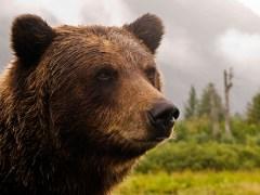 urso-conjunção-nuvens-baralho-cigano