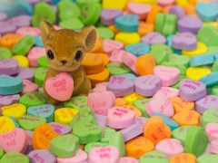 rato-conjunção-coração-lenormand