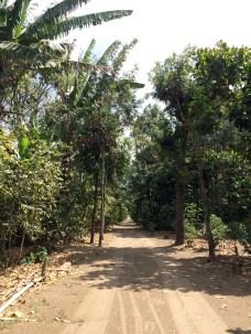 walk through the azotea farm
