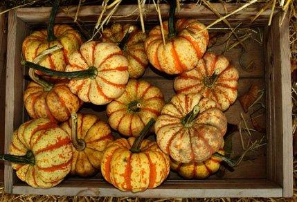 pumpkin-2802106__340
