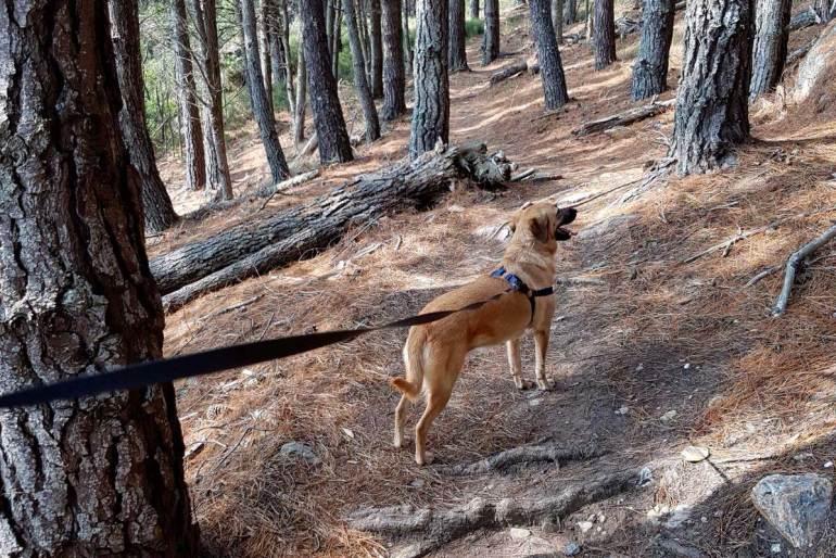 bosque monteferro nigran