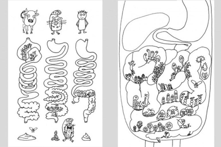 Libro. La digestión es la cuestión