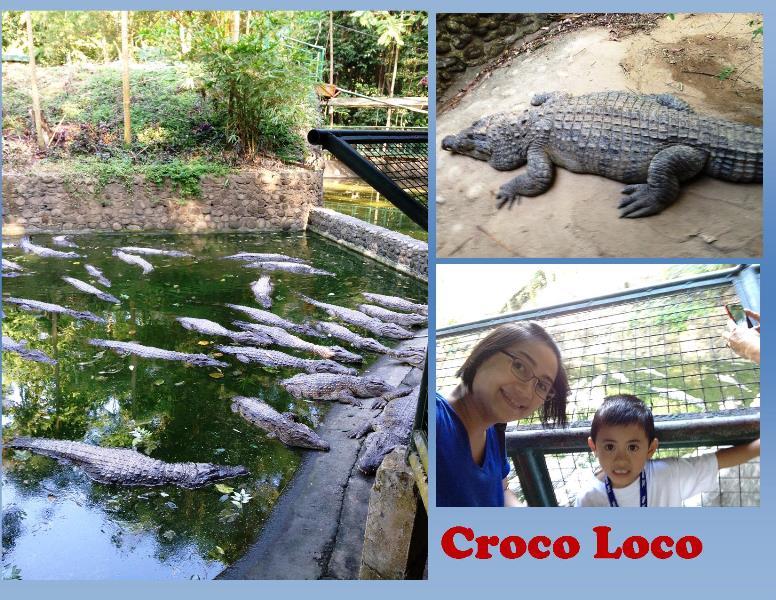 Croco Loco at Zoobic Safari