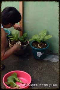 Planting Vegetables in a Pot