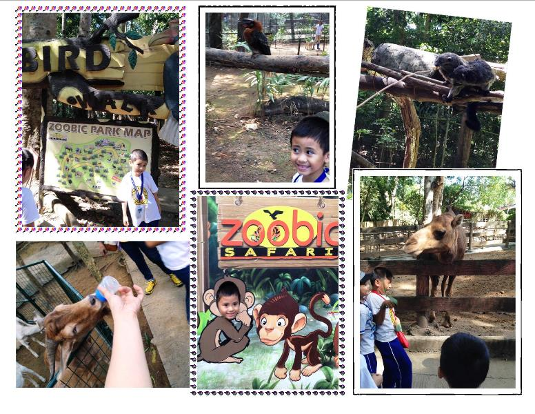 Zoobic Safari Animals