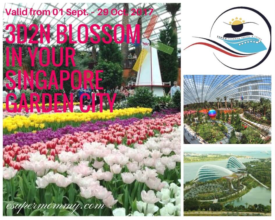 Blossom Singapore Travel and Tour package