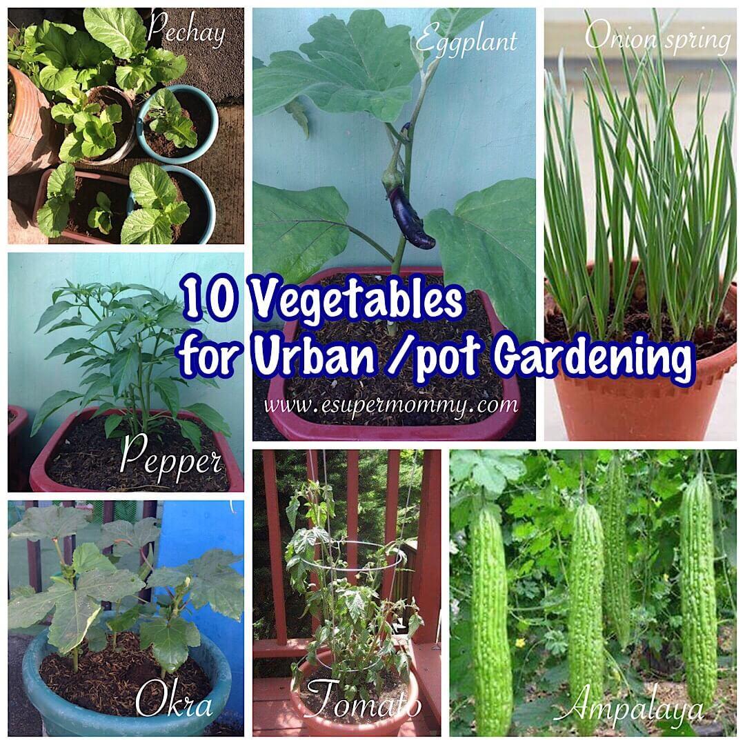 10 Vegetables for Urban Pot Gardening