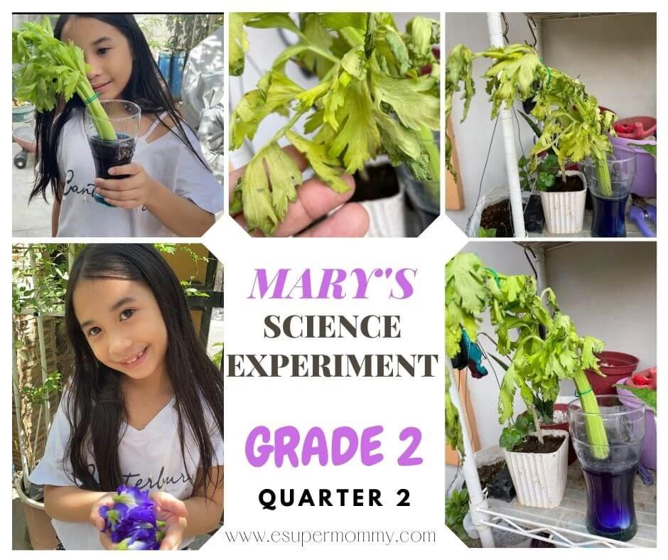 Celery Science Experiment