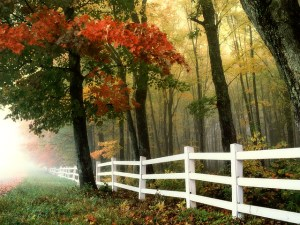 Picking Height for Your Home's Fence