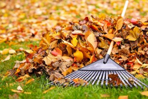 How to Prepare Your Home's Deck for Autumn