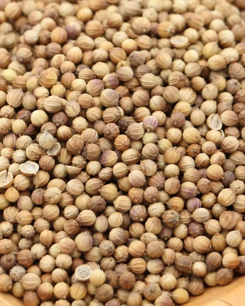 gros plan graines de coriandre