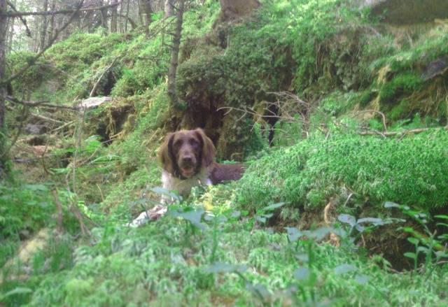 Hund auf dem Weg zum Reedsee