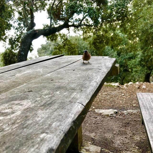 Buchfinka auf Mallorca bei deiner Wander-Pause