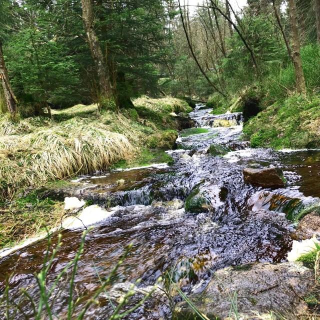 Bach im Harz mit viel Wasser