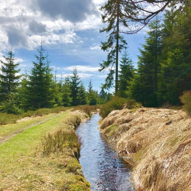 Harzer Natur in der Nähe der Wolfswarte