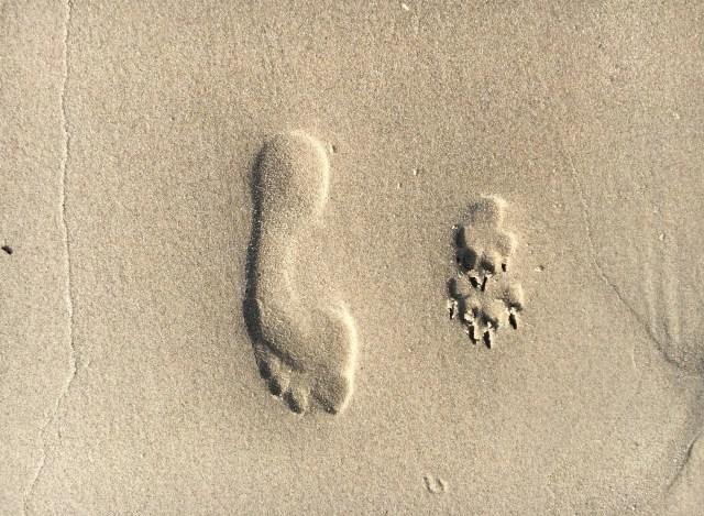 Fuß und Pfotenabdruck im Sand